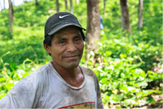 Vicente Pan Age: 45 Place of Residence: Seja Languages Spoken: Español and Kekchi Time Spent on Izabal Agroforest: 20 years  Jobs: Grafting, fertilizing, prune, clearing underbrush, planting kudzu and cacao Other Employment: Vicente has worked on other Farms before Izabal Future Plans: To continue working on the Farm and live in Seja Opinion on Izabal Agroforest: A beautiful farm with a large variety of species in both flora and fauna.